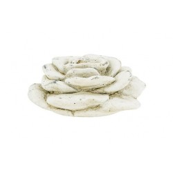ROOS CREME 9X9XH5CM ROND CEMENT  Cosy @ Home